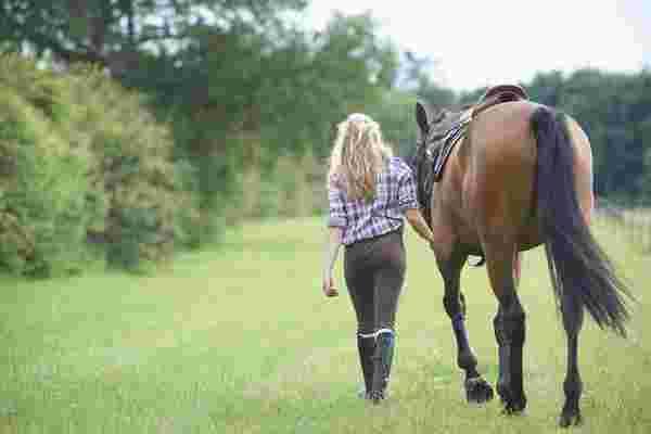我在训练马匹时学到的3个领导力课程